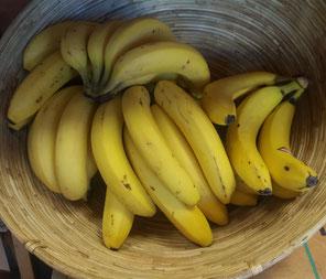 Faire Bananen von UROGAL