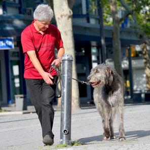 Einzelstunden für Hunde