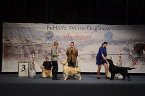 BIG-2 Winterdogshows Budapest Tag 2