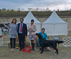 BIS-2 Hungarian Retriever & Waterdogclub 20.10.2018