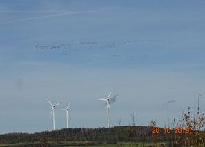Kranichzug über WKA im Sontaer Land. Bei tiefem Vogelzug in Schlechtwetterphasen oder während der Dunkelheit werden viele Flugtiere sterben.