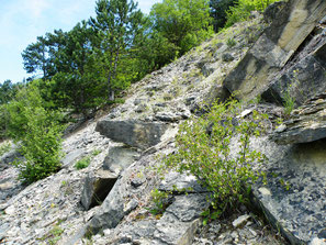 Bergsturz-Felslandschaft