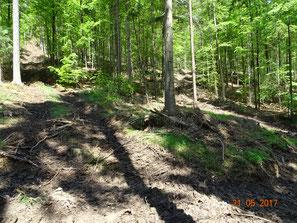 Harvesterfrevel im Kalk-Buchenwald mit Frauenschuh, möglicherweise mittelfristig positive Maßnahme?