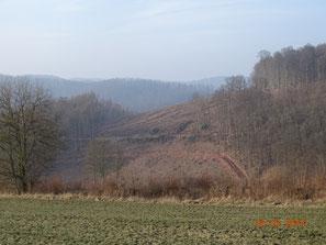 Waldrodung für Autobahn bei Sontra