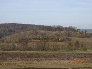 Vom Jungkiefernwald entwaldeter Riedmühlhügel mit erster Ansiedlung von Goodyera repens (Ulfen), dumme Ausgleichsmaßnahme für Autobahbau