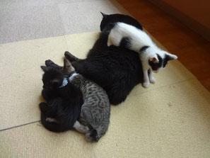 子猫にとっては湯たんぽお兄さん★