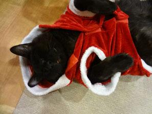 もうすぐ、クリスマス~★  じんサンタ
