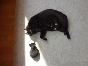 子猫の時期はじんくんの寝返りすら心配の日々(笑;)
