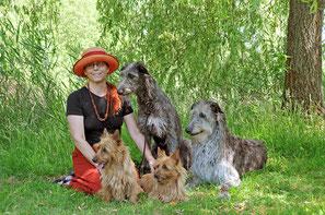 Australian-Terrier-von-den-Grauen-Anfurten