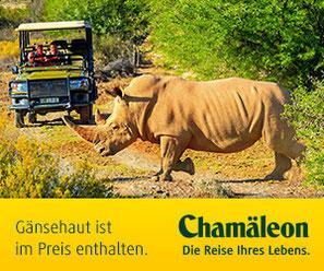Singer & Chamäleon Reisen garantiert gute Reisen bis 12 Personenu