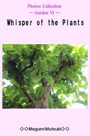 Photos Collection ― Garden Ⅵ ― Whisper of the Plants Megumi Mutsuki