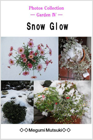 Photos Collection ― Garden 4 ― Snow Glow