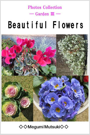 Photos Collection ― Garden 3 ― Beautiful Flowers