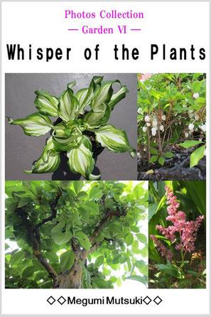 Photos Collection ― Garden 6 ― Whisper of the Plants