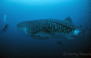 Raja Ampat landscape with the blue sea