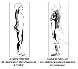 système de coordination neuro musculaire RPG