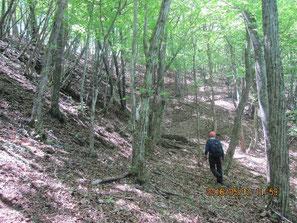 森のヌタ場