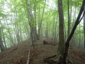 靄(もや)がかかった森