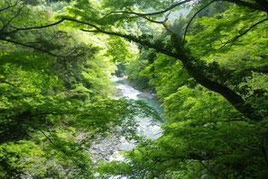 夏 氷川渓谷