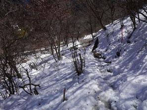 登山口からすぐの登山道の状況