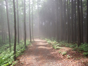 途中の林道