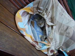 猫と同じく僕もお休み中。。