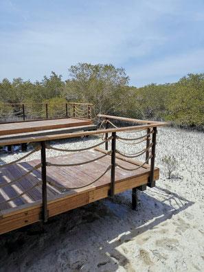 Dem komplexen Wurzelsystem der Mangroven auf den Grund gehen