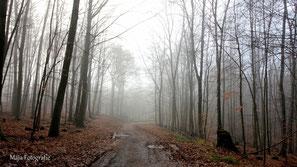 Durch den Nebel, Jan/'18