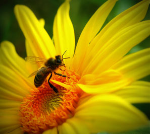 Biodiversité jardin naturel écologique