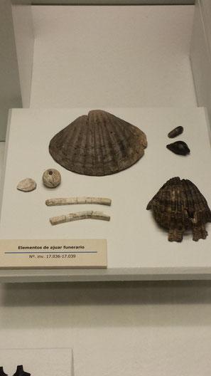 malacofauna-cádiz