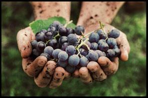 United Vintner, der inhabergeführte Weingroßhandel von Fabian Hartmann, steht für gute Weine aus Frankreich, Spanien, Übersee und der ganzen Welt