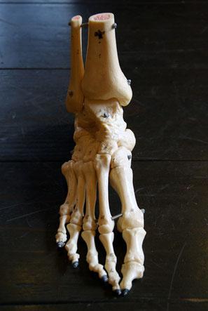 足部の模型をつかって分かりやすくお話しさせていただきます^^
