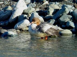・♀ 2011年11月25日 酒匂川