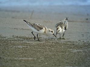 """・2007年9月15日 一ノ宮川河口  ・小さな干潟「秋 誰もいない海~」と口ずさみたいところだが、近くには、魚釣りする小父さんや、釣りの餌となる""""カニ""""を求めて、砂浜を掘り返す小父さんなどがいて、結構、人の姿はあった。"""