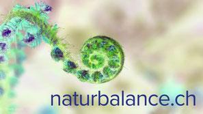naturbalance, webdesign, flowfly.ch
