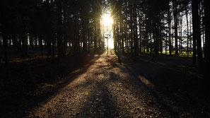 Waldweg, Wintersonnenwende, flowflyphoto