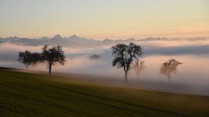 Nebelgrenze, Bäume, Winter, flowflyphoto