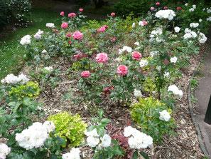 Rajeunissement Jardin de Résidence par privilegejardin.com