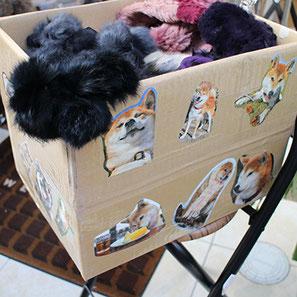 柴犬の写真は去年の犬川柳カレンダーを切り抜きました。