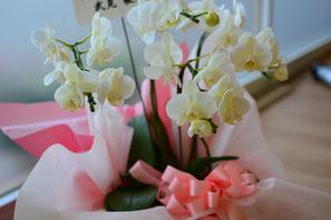 フローラのお花