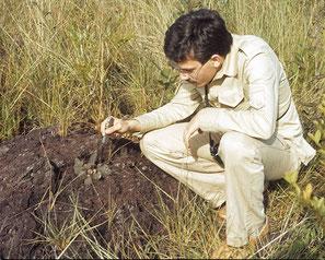 im ersten Habitat: Arthrocereus glaziovii (campos-portoi), Minas Gerais 1979