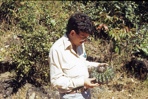 Discocactus latispinus, Serra do Cabral/Minas Gerais