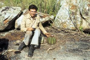 Melocactus ernestii, Bahia 1979