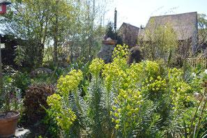 Gartenpflege wird bei uns mit Gefühl und Sinn für die Pflanzen und ihre Sprache gemacht. Pflanzen drücken sich in ihren Formen, Farben und Düften, im wechsel der Jahreszeiten aus.