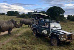 safari südafrika, yoga safari, yogareise, yoga ferien, südafrika reise, südafrika ferien