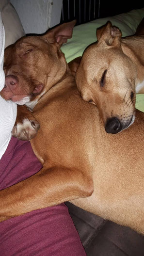 Ada lebt jetzt mit Hundekumpel im Allgäu.