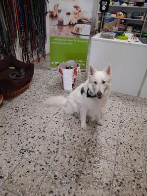 Weißer Schäferhund mit Tierfutterspende