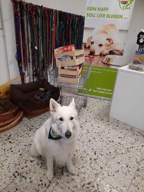 weißer Schäferhund vor Tierfutterspende