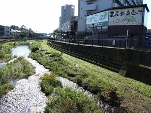 ●野川の下流(調布方面)に向けて、のんびり歩くこと約30分。深大にぎわいの里に到着。野川と中央高速道路が交差するあたりにあります