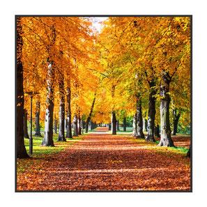 """Bildheizung """"Herbst"""", 300 Watt, 60x60cm, hier mit Rahmen anthrazit glänzend, zum Vergrößern anklicken!"""